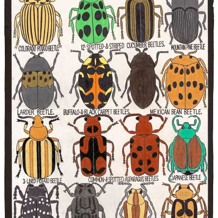 The Major World Troublemaker Beetles